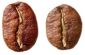 robusta vs arabiga